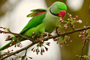Wildlife Smuggling: Over 60 Rose-Ringed Parakeets Rescued from Delhi